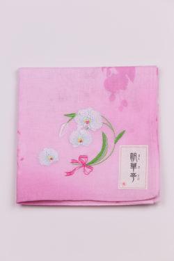 胡蝶蘭・ピンク