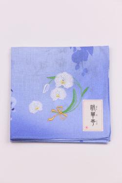 胡蝶蘭・ブルー