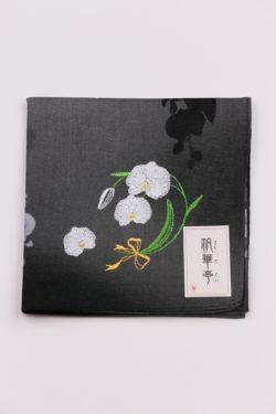 胡蝶蘭・ブラック